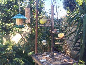 Bird feeder in Liz at Lancaster's garden - seeds, nuts, fruit, suet and left over bread