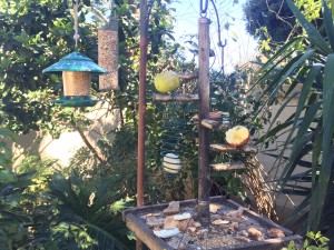 Bird feeder in Liz at Lancaster's garden - seeds, nuts, fruit, suet and left over breadLiz at Lancaster Guesthouse