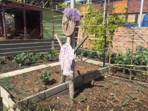 Scarecrows galore
