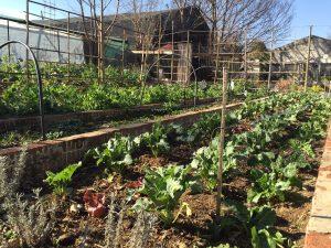 Vege garden - all it needs is Peter, Mr McGregor and his hoe and sieve
