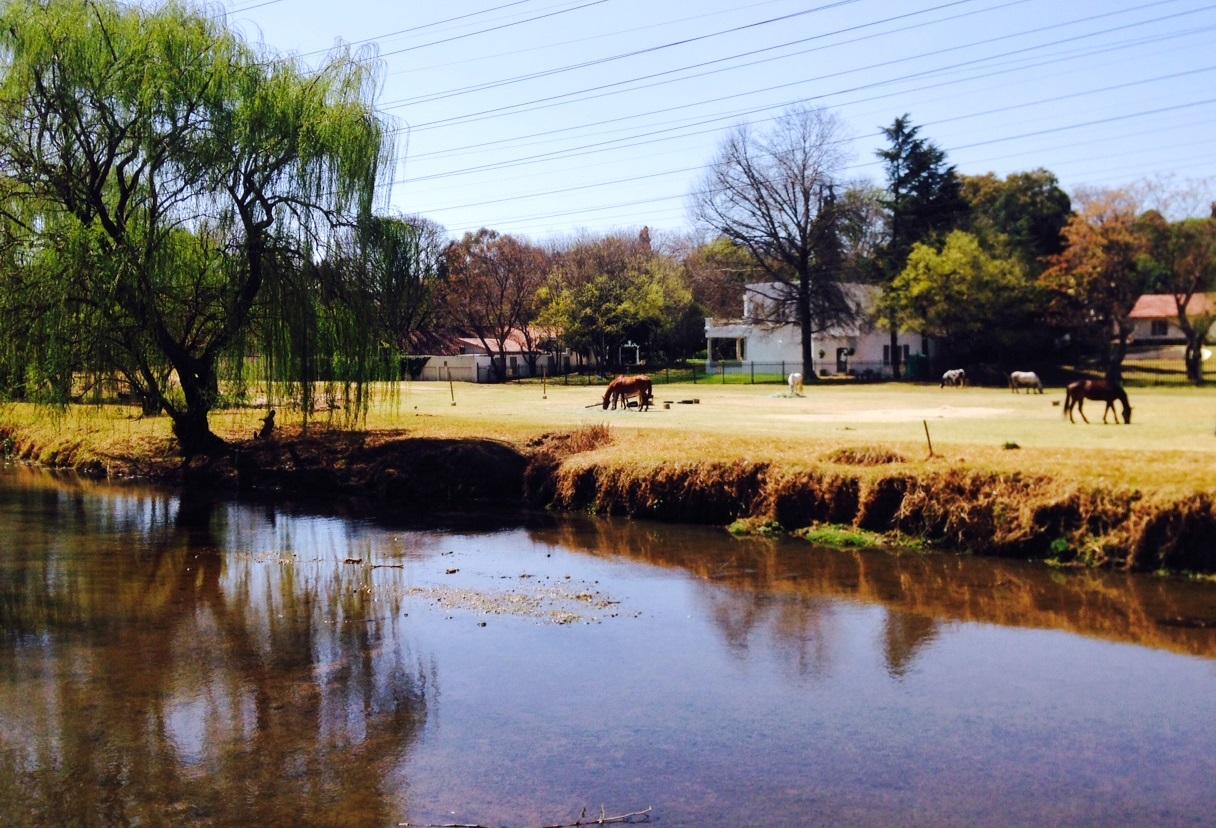 Horses grazing in paddocks alone the Braamfontein Spruit in Delta Park